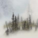 ГРАФИКА в тумане | Brooks Shane Salzwedel