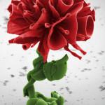 МИКРО-цветы | Wim Noorduin