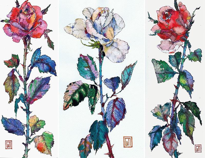 розы акварель