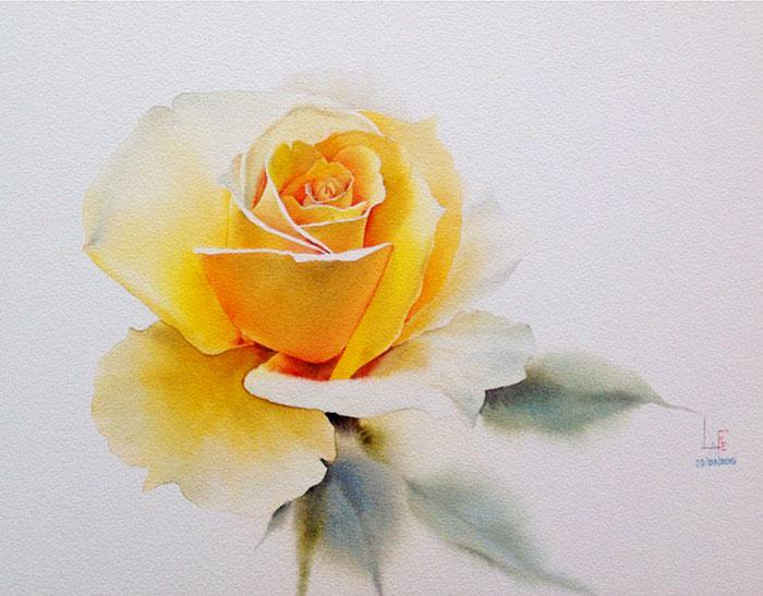Роза 13