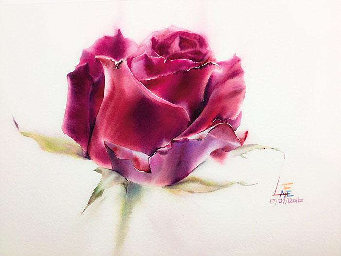 Роза 17