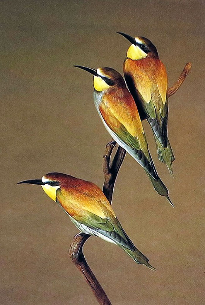 Птицы 2