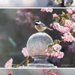ПТИЦЫ на кончике кисти | Susan Bourdet