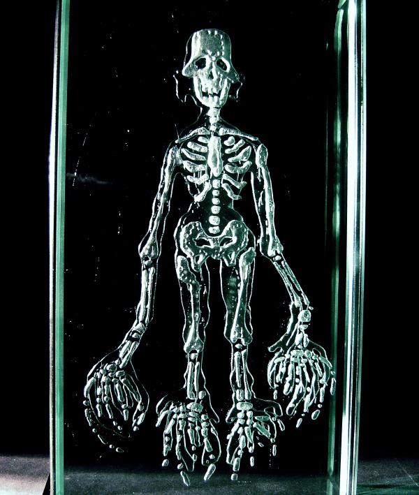 Скелет 1