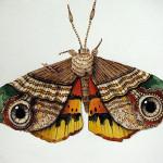 НАСЕКОМЫЕ из текстиля | Yumi Okita