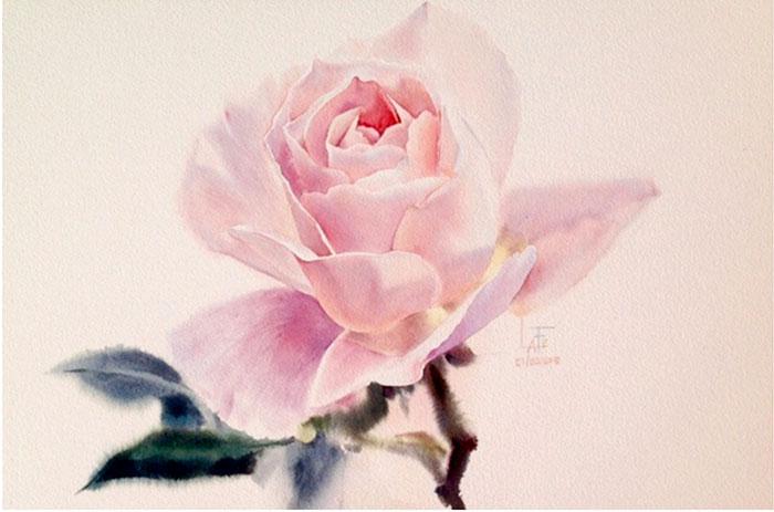 Роза 4