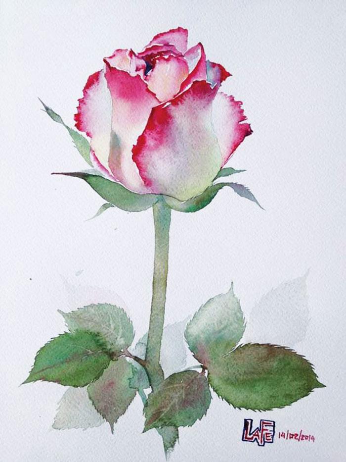 Роза 5