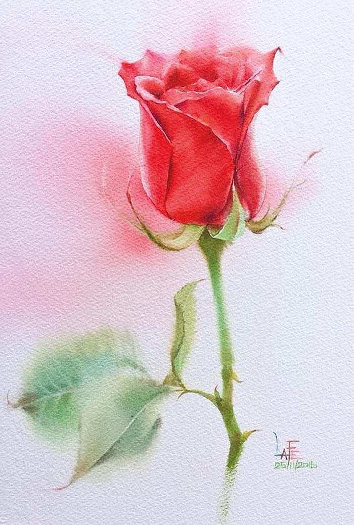 Роза 7