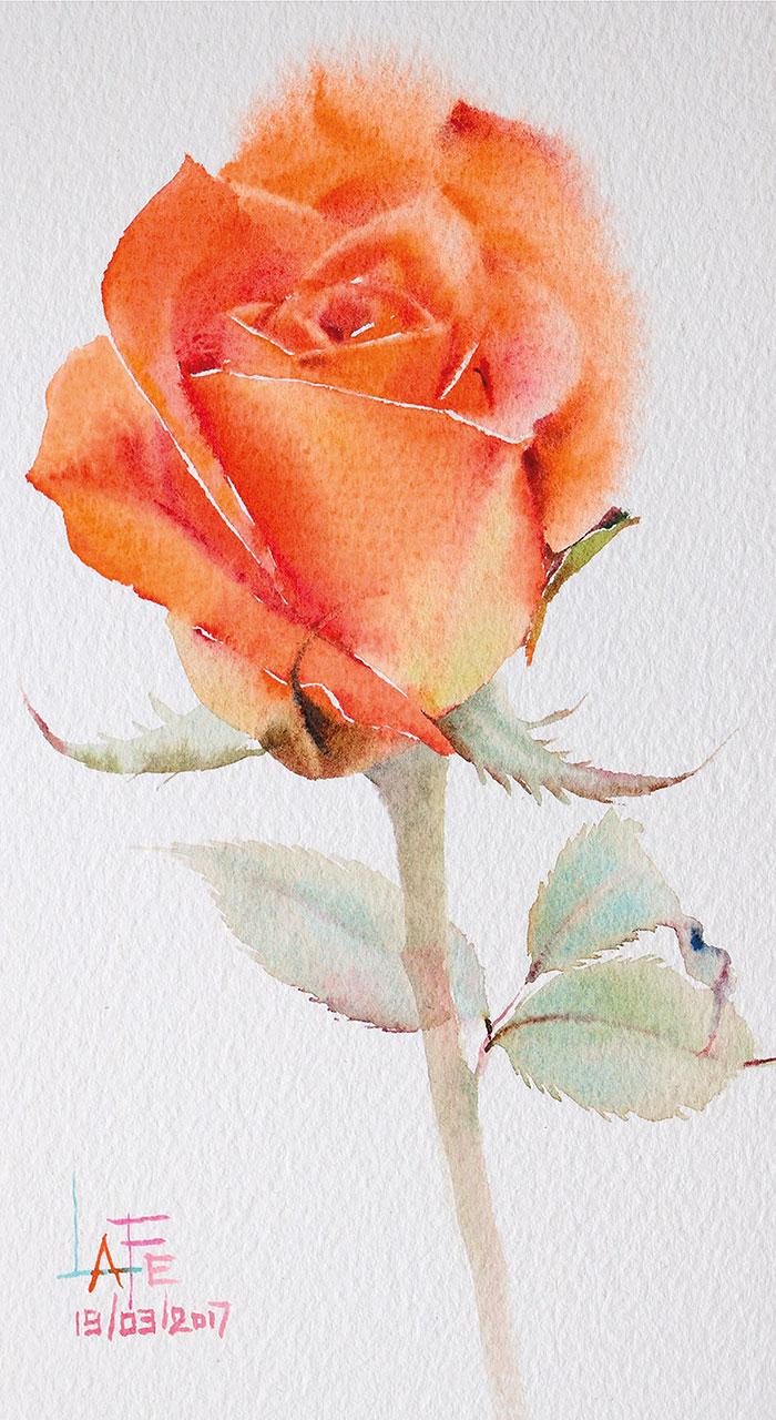 Роза 10