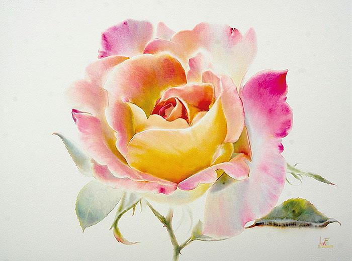 Роза 11