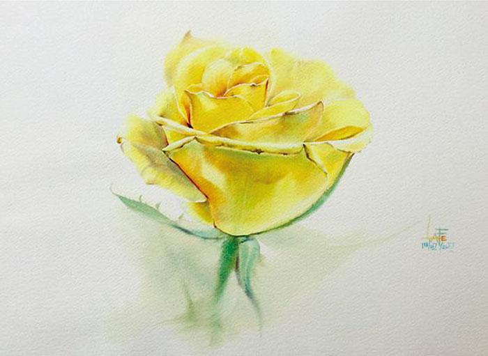 Роза 12