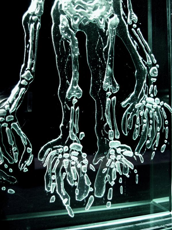 Фрагмент скелета 1