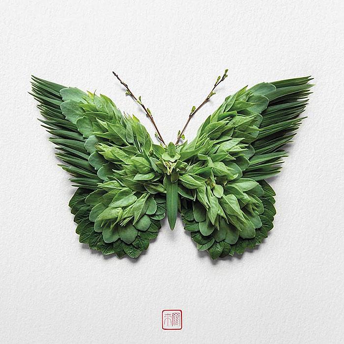 бабочка флористика