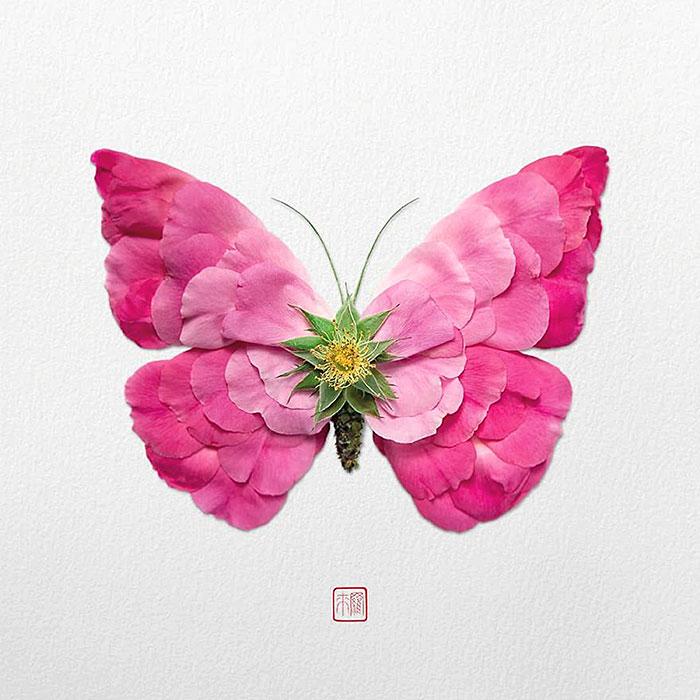 красивая легкая бабочка