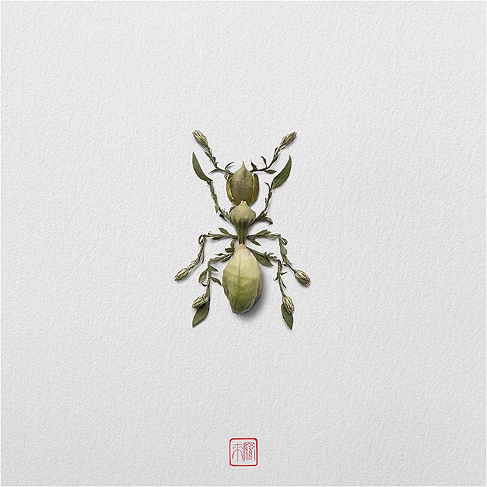 муравей из растений