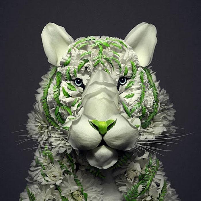 цветок тигра