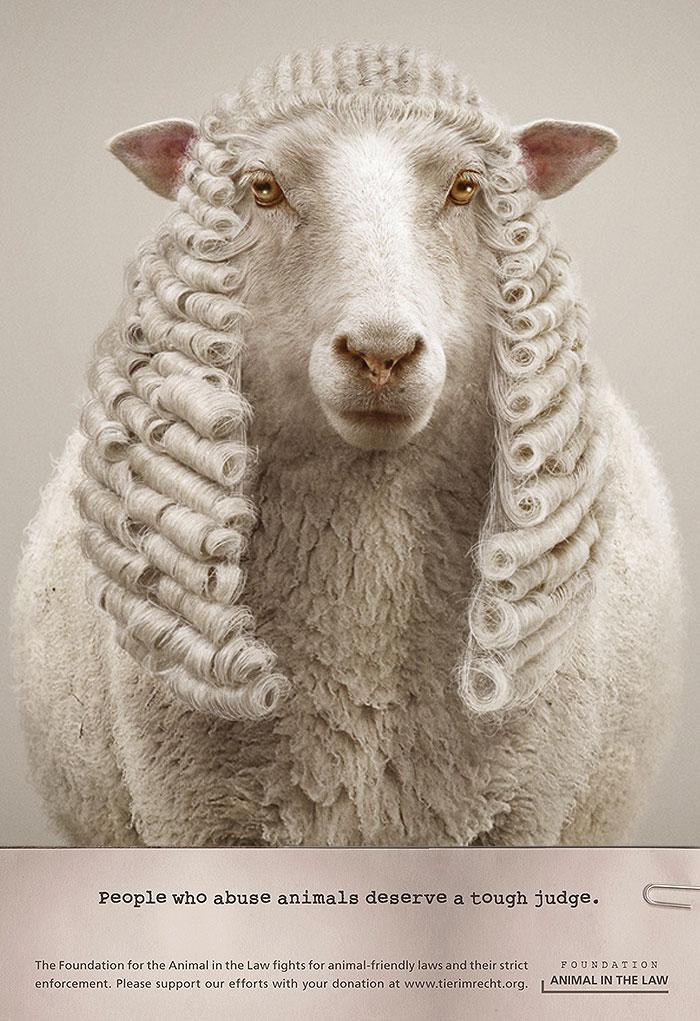 белая овца